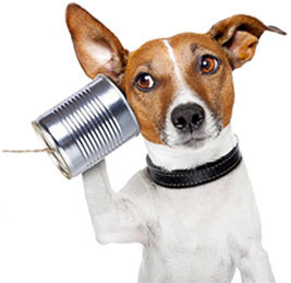 Header_yondooNEWS